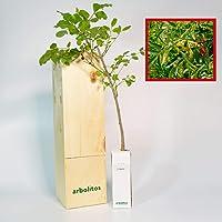 FRESNO - alveolo forestal en caja de madera - arbolito ideal para regalo (1)