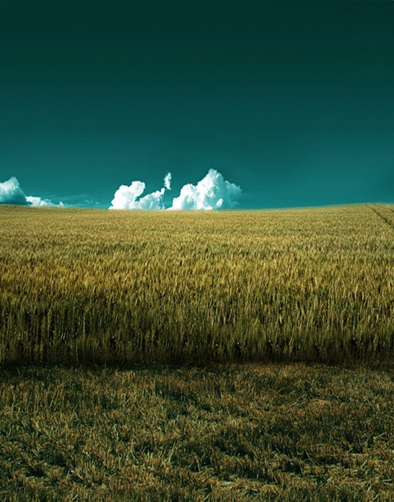 A MonamourアウトドアGreen Grass Flower Landフィールドブルースカイホワイト雲空風景景色5 x 7ftビニール写真の背景幕背景画像Studio小道具  wheat fields B06WW9K9SX