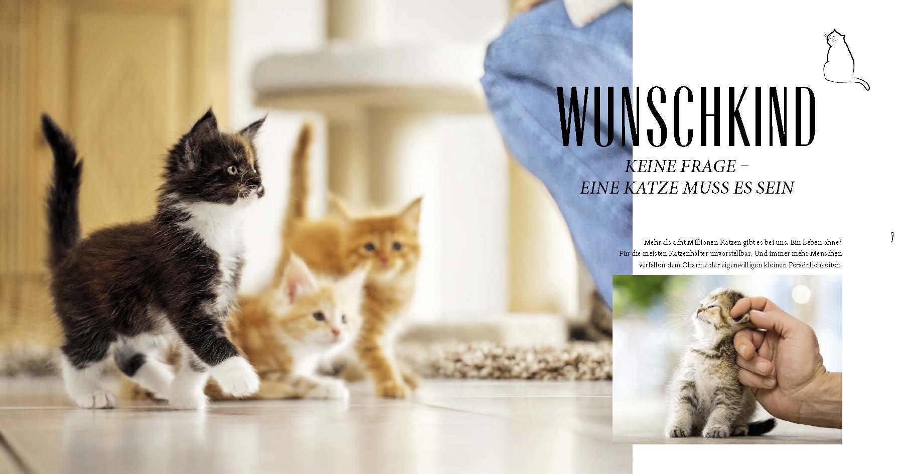 Katzen-Basics: Alles, was Katzenhalter wissen müssen GU Tier ...