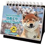 アクティブコーポレーション 2019年 犬 柴犬 カレンダー 日めくり 卓上 しばいぬ写真集 ACL-587 (2019年 1月始まり)