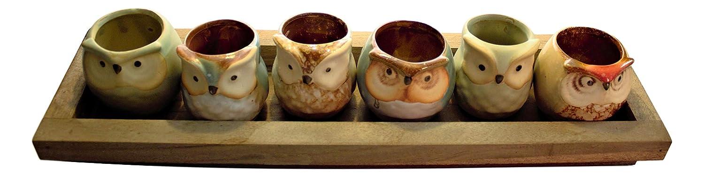 Fat Plants San Diego 6 Ceramic Owl Succulent Planters with Drainage Cedar Tray