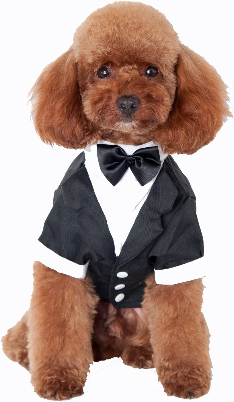 WESEEDOO Hunde Klamotten Franz/ösische Bulldogge Kleidung Welpenkleidung Welpenmantel Hundekleidung f/ür den Sommer K/ätzchen Kleidung Hundemantel Black,xs