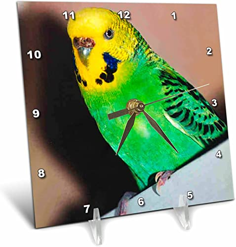 3dRose dc_929_1 Budgie Parakeet Desk Clock, 6 by 6-Inch