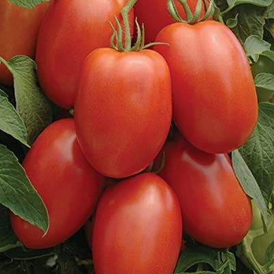 Tomato- Roma- 50 Seeds : Garden & Outdoor