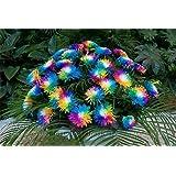NooElec Seeds India Rainbow Chrysanthemum Flower Seeds Pack