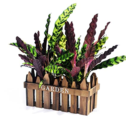 Revolumini Herb Planter Boxes Wood Porch Deck Railing Planter Rectangle Window Planter Box Container With Removable Metal Liner 5 Colors 1 H