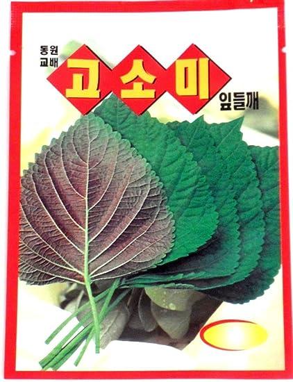 Sesame Leave Seeds Korean 25+ Organic Home Grown Gardening Perilla 깻잎 씨