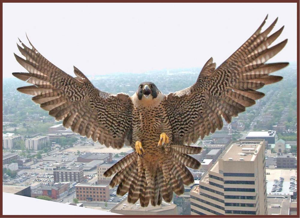Peregrine Hawk Landing On Tall建物 – エッチングビニールStained Glass Film , Static Cling Window Decal 26 in x 41 in B008DKZ5VI 26 in x 41 in