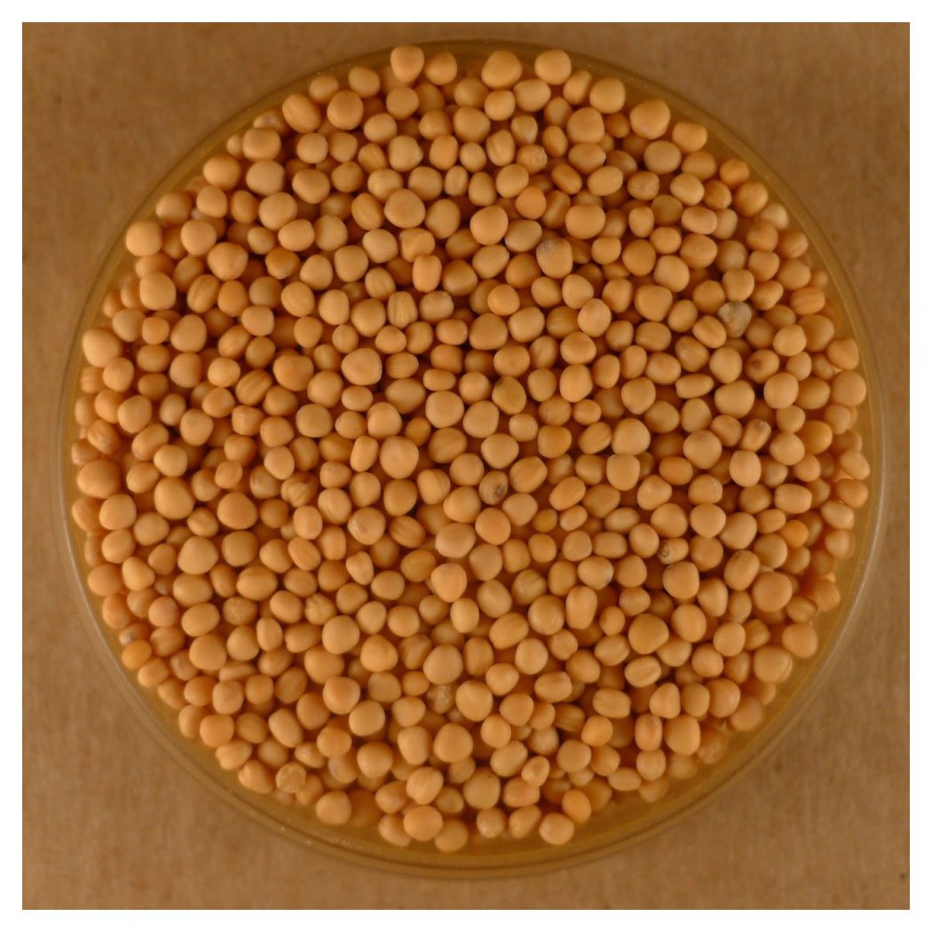 Mustard Seeds, Whole Yellow - 25 lbs Bulk