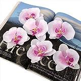 20pcs 9 Centimetri Seta Artificiale Farfalla Teste Di Orchidea Decorazione