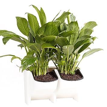 Amazon Com Hanging Flower Plant Pot 2 Pocket Hanging Vertical
