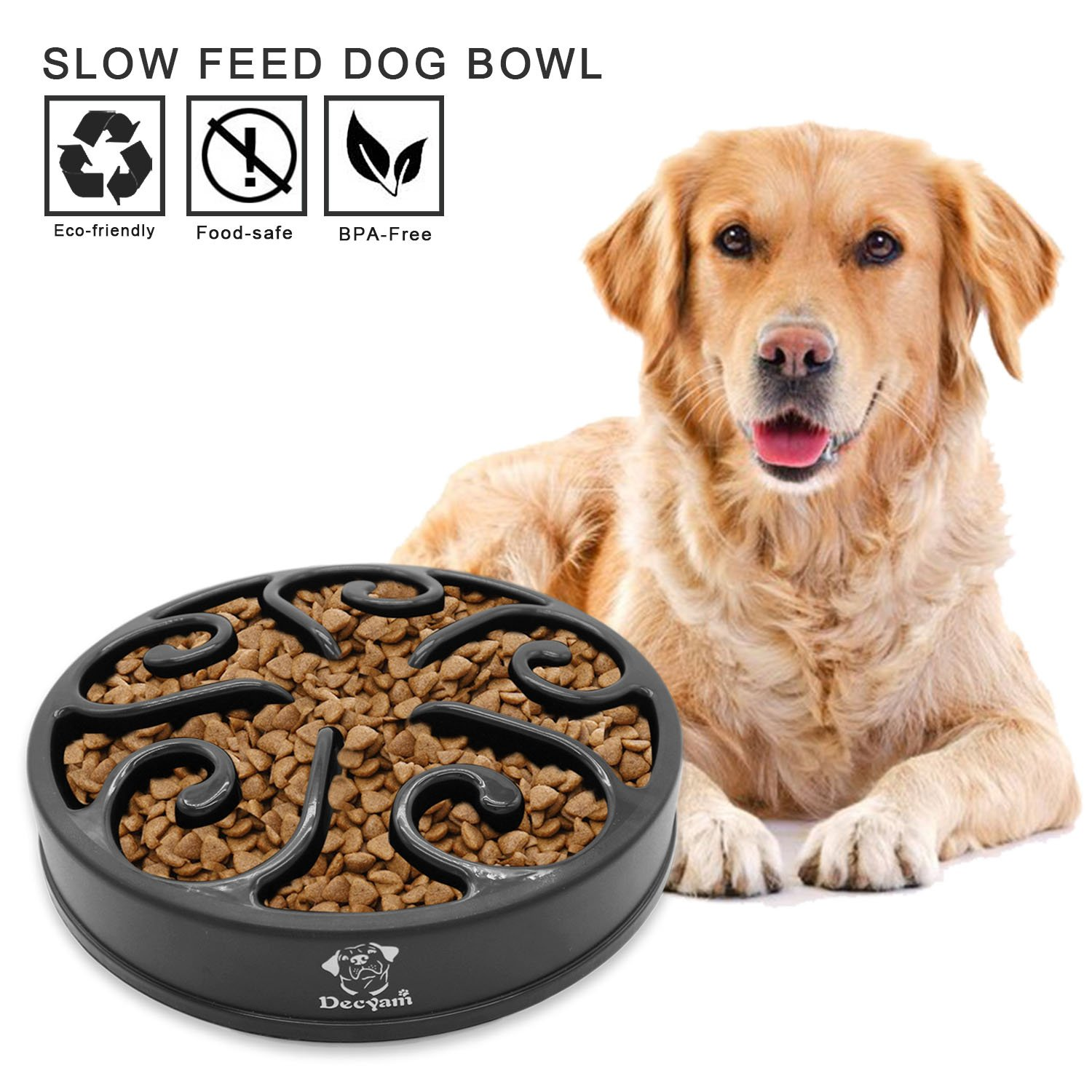 dog slow one june puzzle your feeder benefit using best bowl could