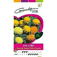 Gondian 512483 Semences-Rose d'Inde Double Naine Pollux Variee-CP 3, Jaune, 1x8.1x16 cm