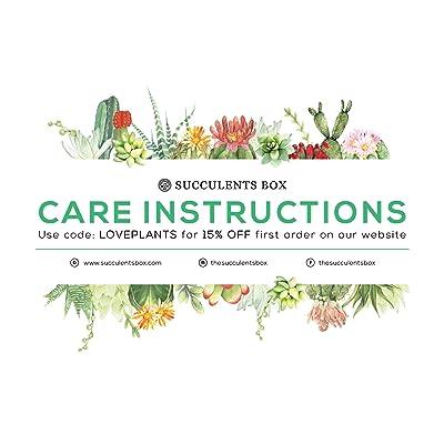 Succulent Care Card (Succulent Care Card) : Garden & Outdoor