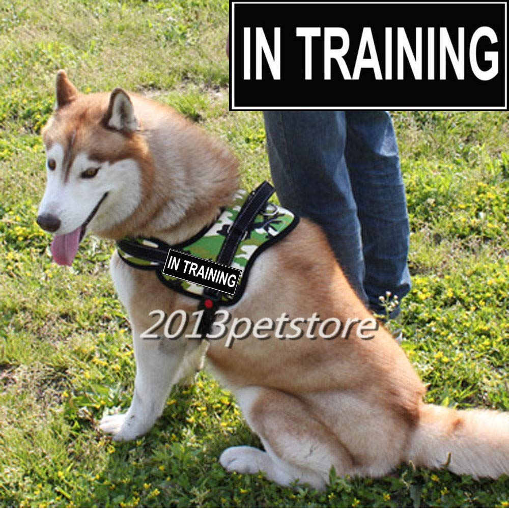 Red IN TRAINING XL Red IN TRAINING XL FidgetKute Sports Dog Harness Walking Traninig Nylon Service Vest with Handle Large pet Red XL