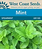 Mint Seeds - Spearmint