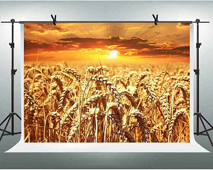 FHZON GEFH354 - Fondo para fotografía de Trigo Dorado de otoño de ...