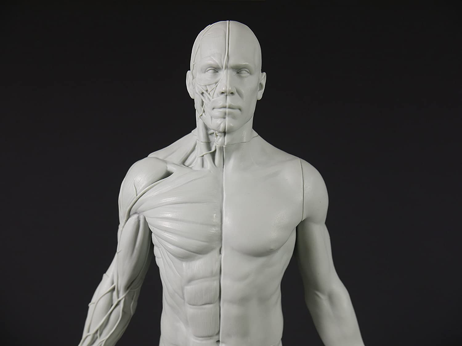 Male Adaptable Anatomy Figure 13.4-inch Anatomical Reference for Artists Grey