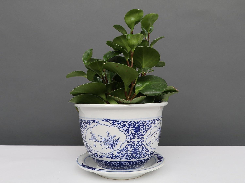 Blumentopf  Pflanztopf Drachenmotiv Blau Weiß  Porzellan Ø 17 cm P0011-1