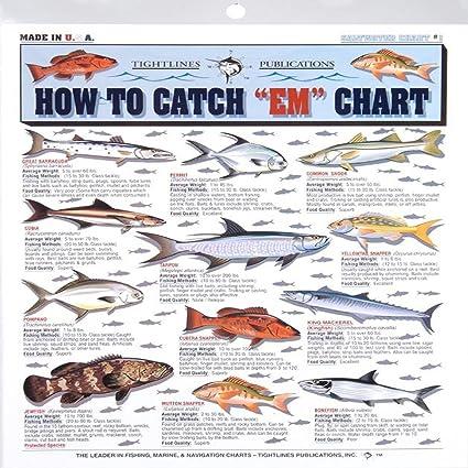 Amazon com fishermans saltwater fish chart 1 boating equipment
