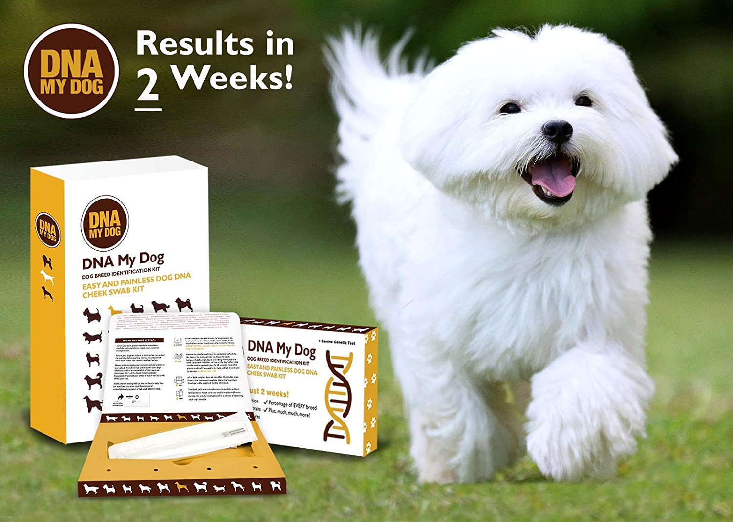 Accurate /& Painless Easy Dog DNA Breed Test
