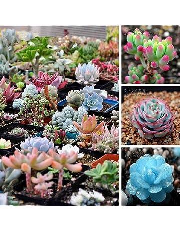 Cactus E Piante Grasse Da Interno Amazon It