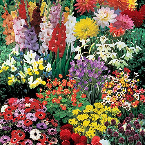 A Complete Summer Garden - 50 Bulbs for 50 Days of Continuous Blooms by Hirt's Gardens