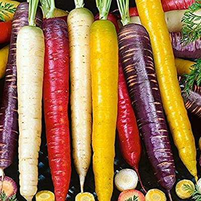 Acazon Vegetable Seeds, 50 pcs/Bag Rainbow Blend Carrot Seeds Home Garden Yard Vegetables Plant Vegetables : Garden & Outdoor