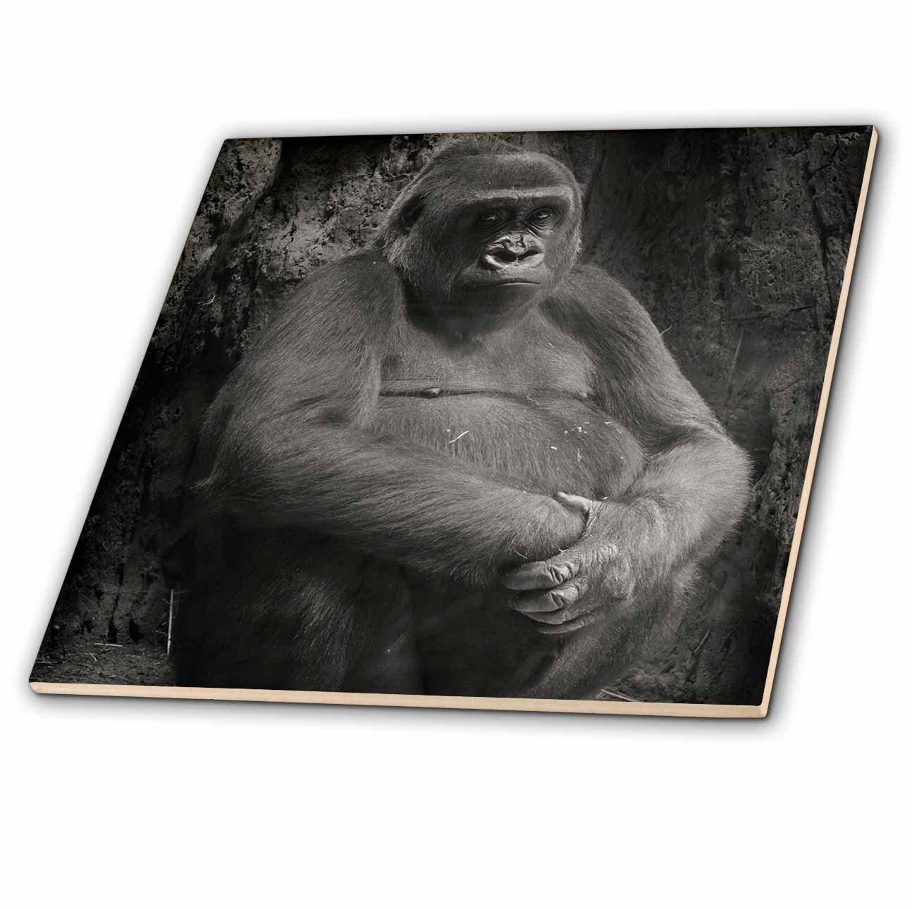 """3dRose ct_203172_4 Black & White Picture of a Gorilla Ceramic Tile, 12"""""""