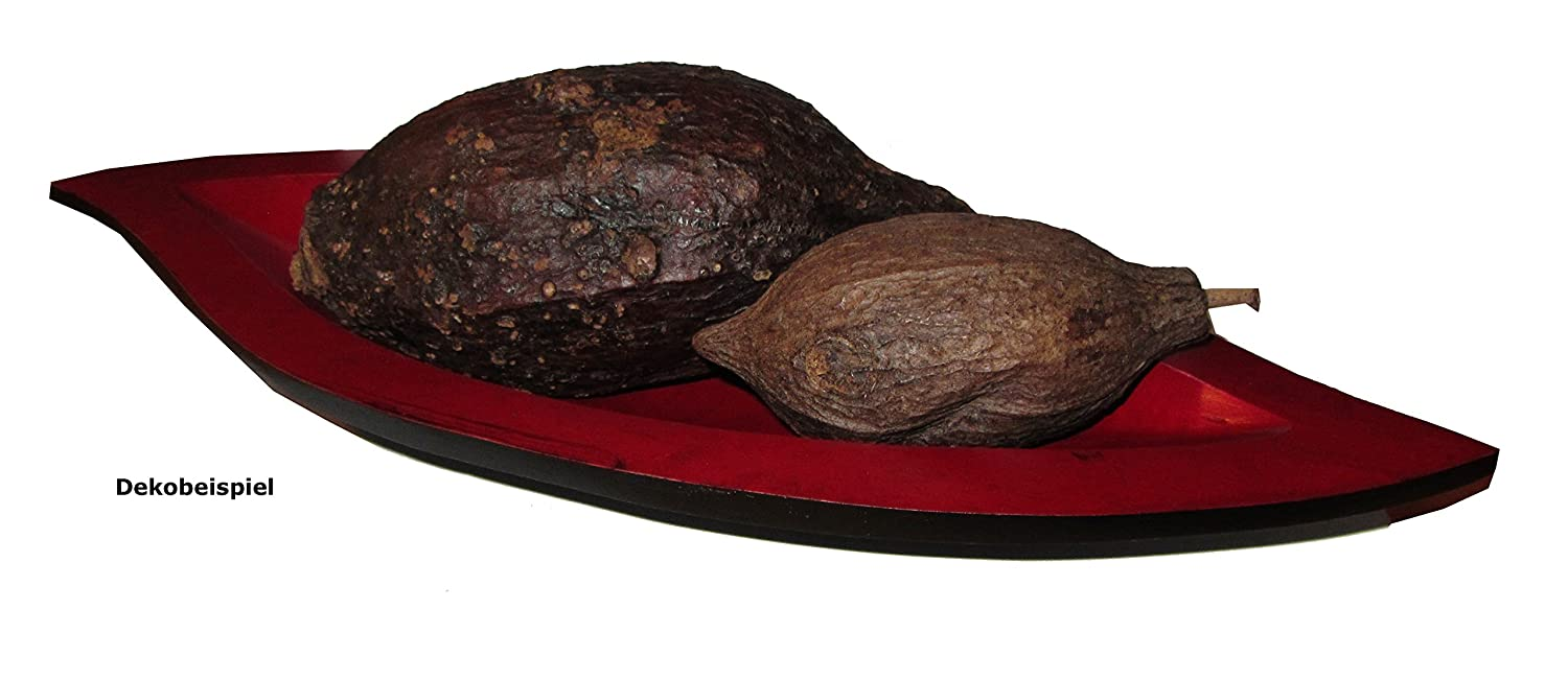 1 Piece full Cocoa bean Cocoa Fruit Cocoa bean Large cocoa, dried, Length approx. 7.1 7.9in, Height approx. 2.8 3.9in, fresh dried, natural dried, you can hear die Cocoa fruit in the inner look for, fruit exude canvas light Chocolate Fragrance, Colour: Ch