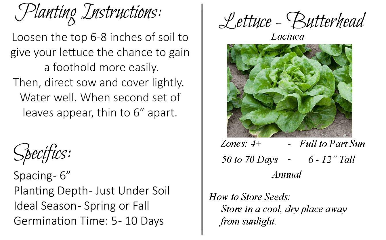 Amazon Lettuce Seeds Butterhead Buttercrunch Heirloom