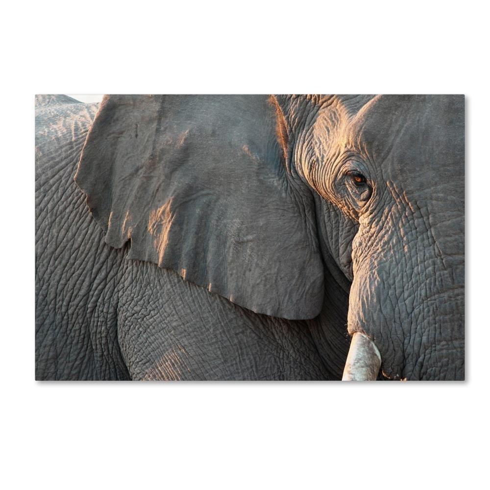 象9 byロバートハーディング画像ライブラリ、22 x 81 cmキャンバス壁アート B0762RR897