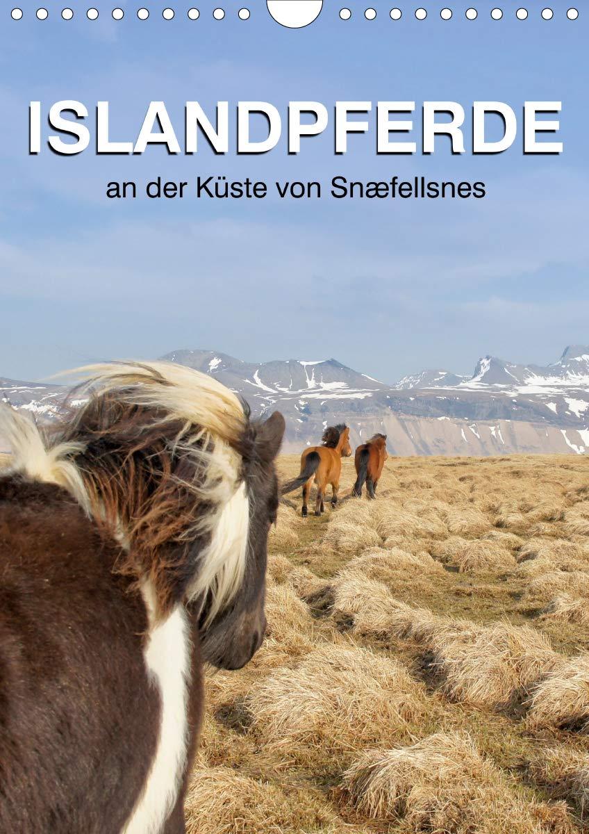 ISLANDPFERDE an der Küste von Snæfellsnes (Wandkalender 2020 DIN A4 hoch)