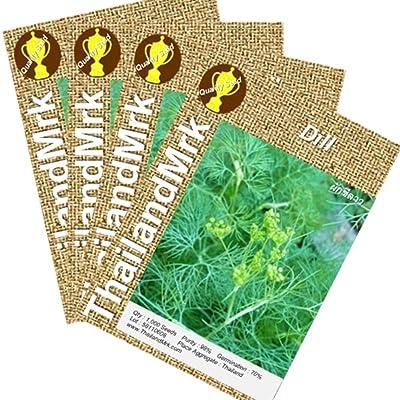 Thai Dill Anethum graveolens Umbelliferae 4 Bulk ThailandMrk : Garden & Outdoor