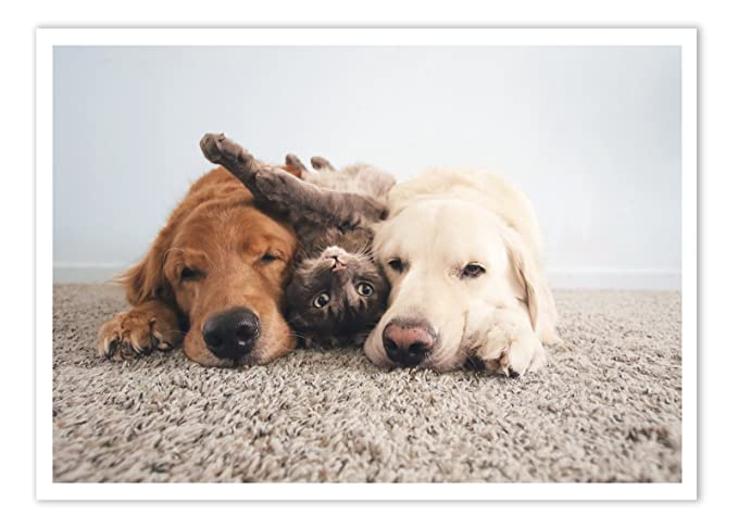 Amazon.com : Birthday Greeting Card 2 Dogs and Cat Golden Retrievers Palm Press Inc - 1 Card & Envelope - Printed in USA : Office Products