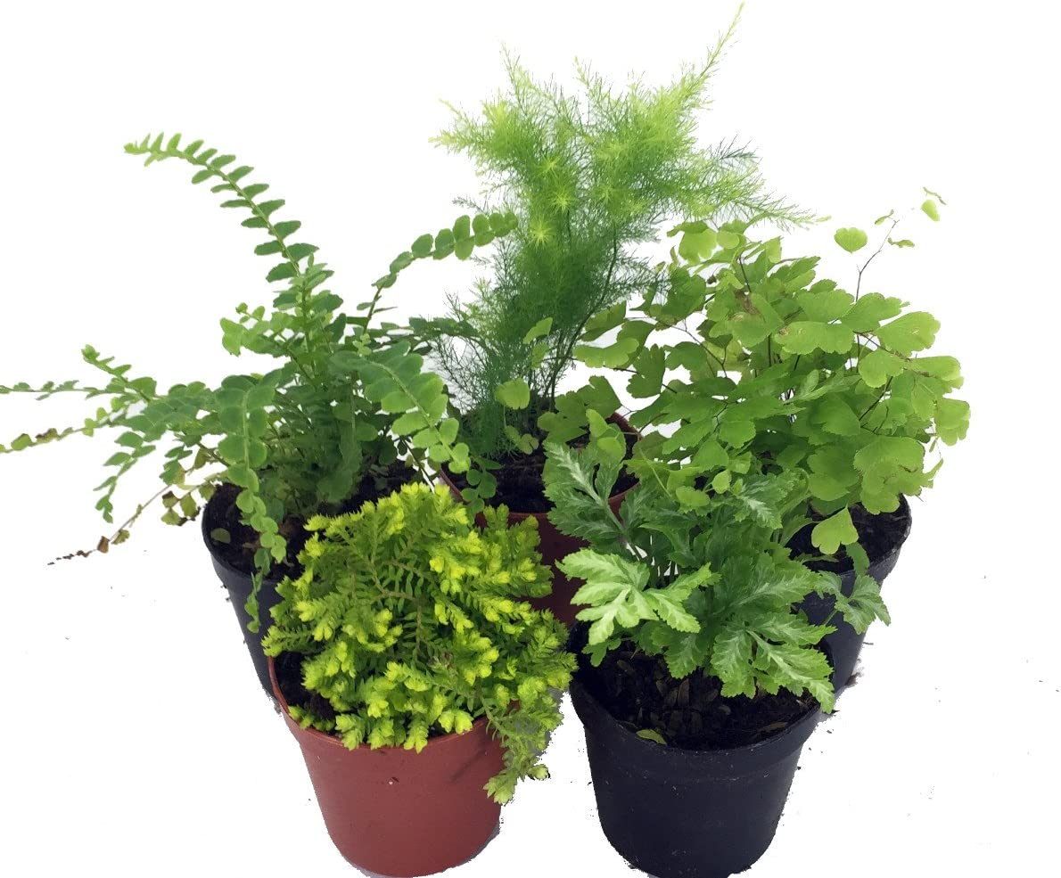 Buy 3 Save $5 Miniature Fairy Garden Plastic Two-Toned Green Plants-Set of 10
