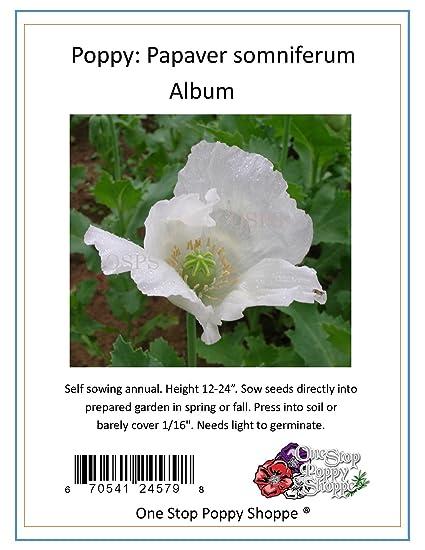 Amazon 100 white poppy seeds papaver somniferum album 100 white poppy seeds papaver somniferum album poppies one stop poppy shoppe mightylinksfo