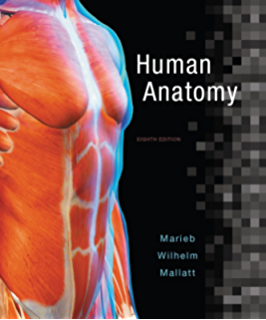 Human anatomy 4 mckinley amazon fandeluxe Image collections