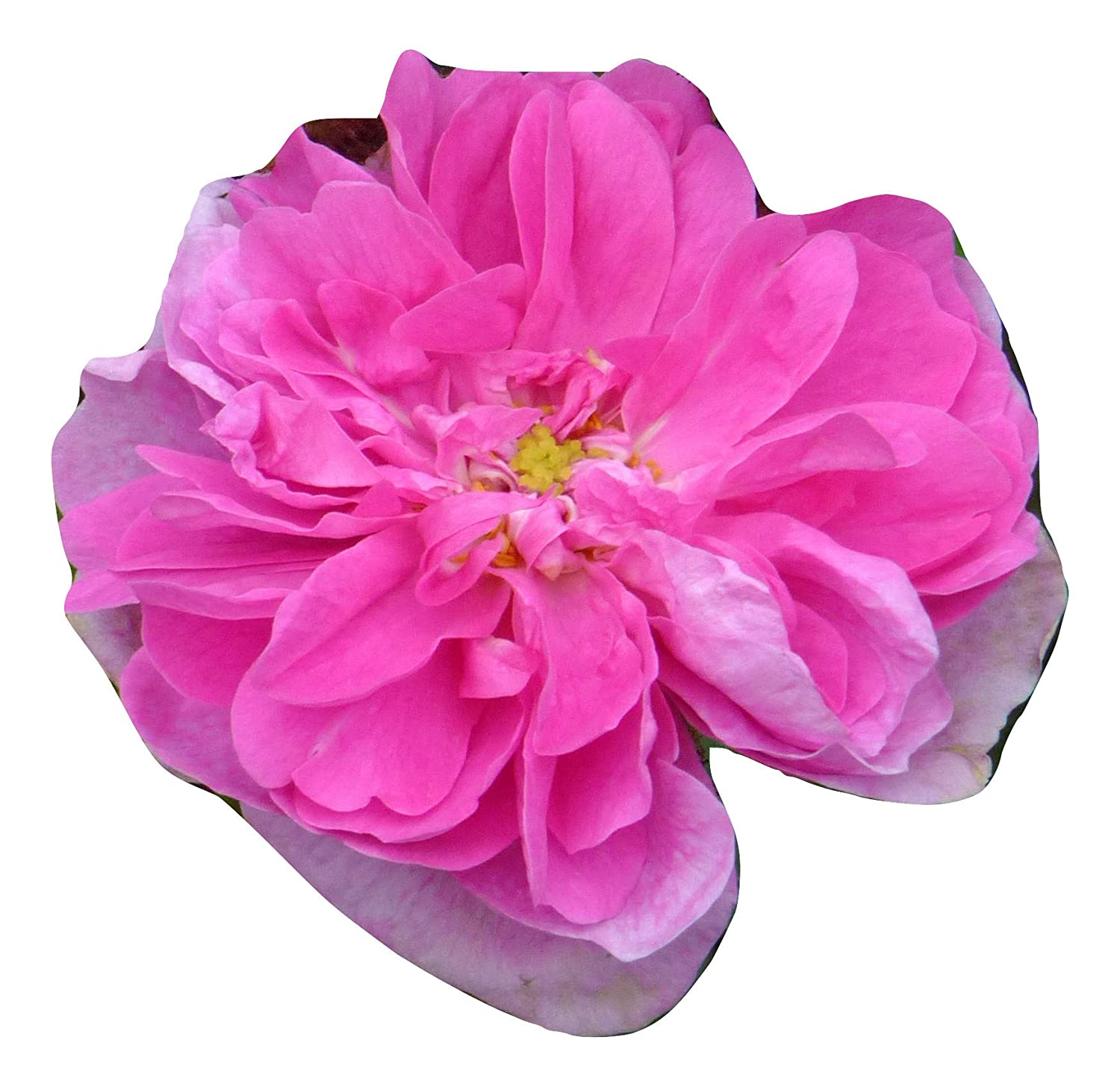 Superb Personalised Plant /& Flower Gifts For All Occasions ROSE ZOE