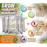 Morel Mushroom Spore Growing Kit 3 Pack – Best Outdoor Morel Mushroom Growing Kit - Grow The Most Desirable Mushrooms…