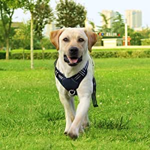 Cinf Summer Dog Harness No-Pull Walking Light Pet Harness Not Tight Adjustable Outdoor Breathable Pet Vest Reflective Oxford Material Vest Easy Control Small Medium Large Dogs Pet Supplies-Navy Blue
