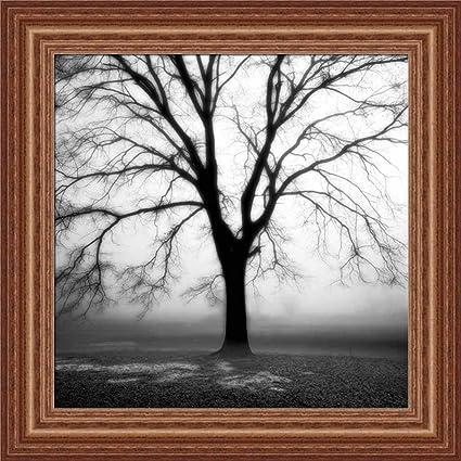 Amazon.com: Fog Tree Study III by Jamie Cook Black White Photography ...