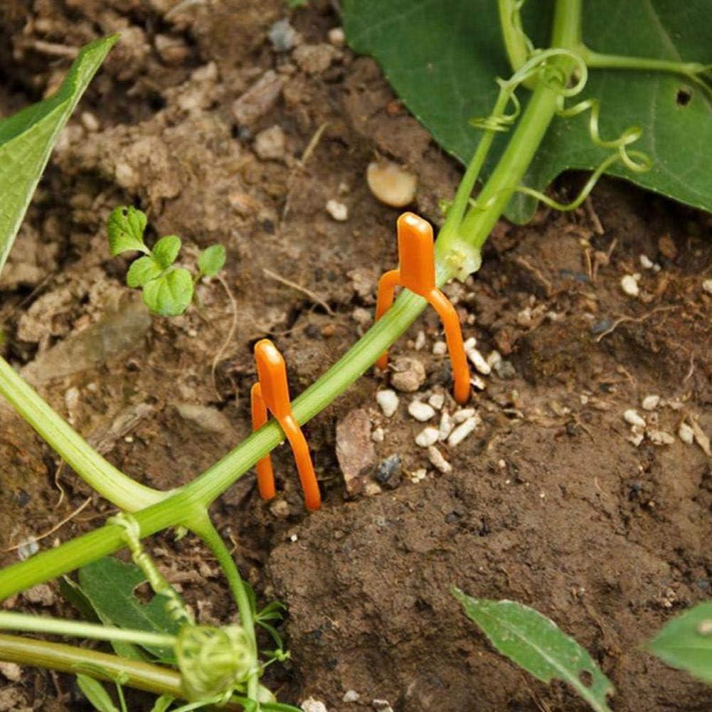 jardinage TUEU Lot de 50 clips de support pour plantes pour tomates serres fraisi/ères