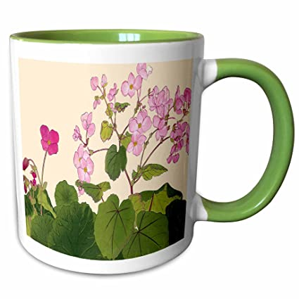 Buy 3drose Bln Japanese Woodblock Flowers By Tanigami Konan Pretty Light Pink And Dark Pink Begonias 15oz Two Tone Green Mug Mug 175438 12 Online At Low Prices In India Amazon In