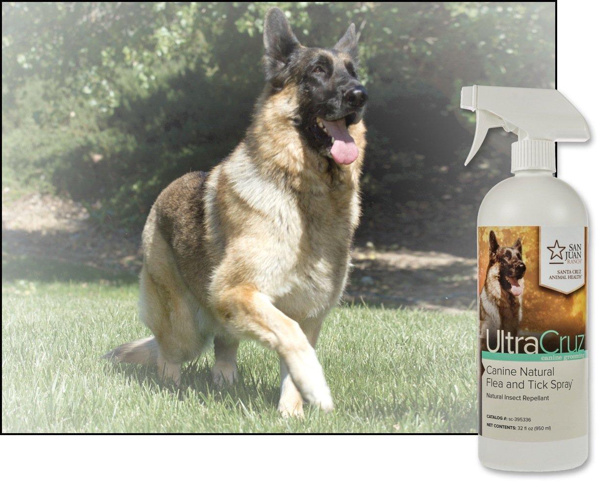 UltraCruz Canine Natural Flea and Tick Spray for Horses, 32 oz. by UltraCruz (Image #4)