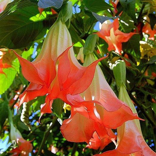 Wintefei - 40 adornos de flores para jardín, diseño de Mandala Datura: Amazon.es: Jardín