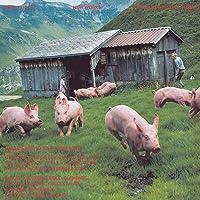 147 Backcovers: Summer Fall Winter Spring: Anzeigen Galerie Bischofberger