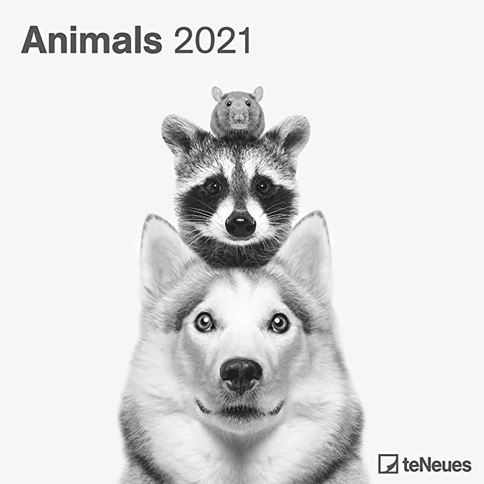 Calendrier Animaux 2021 CALENDRIER 2021 ANIMAUX PHOTO NOIR ET BLANC   animaux sauvage