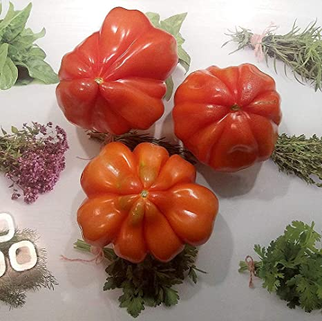 Sperli Premium Tomaten Samen Corazon ; aromatische Fleischtomate Typ Ochsenherz ; Fleischtomaten Saatgut