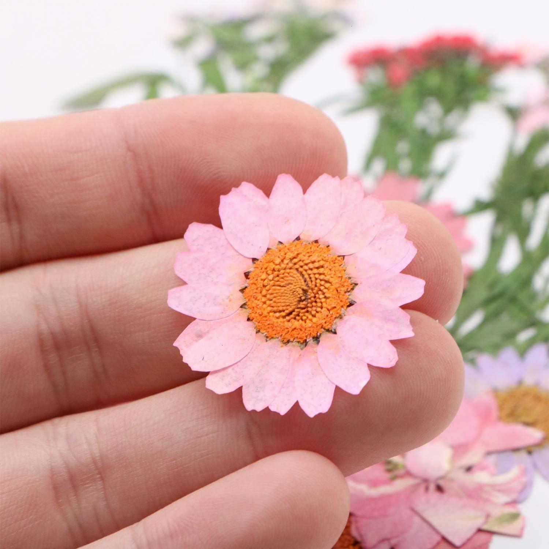 80 piezas de flores prensadas secas naturales mezcladas m/últiples p/étalos de hojas de flores secas para bricolaje velas de resina joyer/ía colgante de u/ñas manualidades haciendo arte decoraciones
